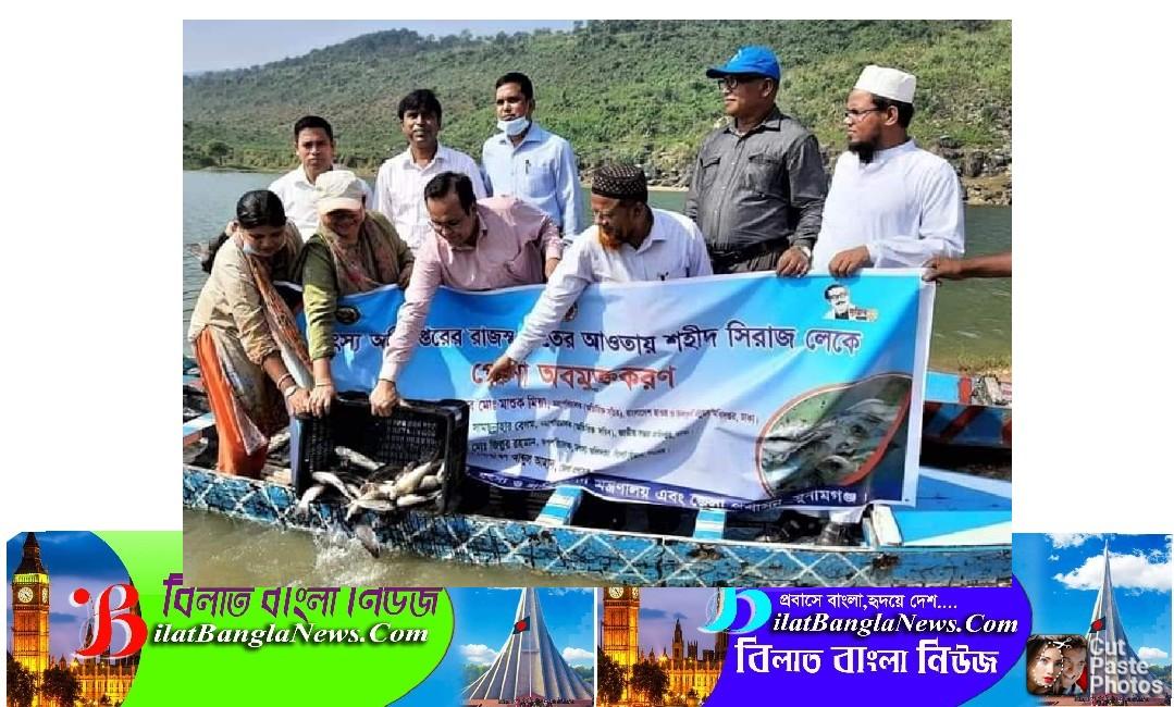 তাহিরপুরের পর্যটন কেন্দ্র শহীদ সিরাজ লেকে পোনা মাছ অবমুক্ত