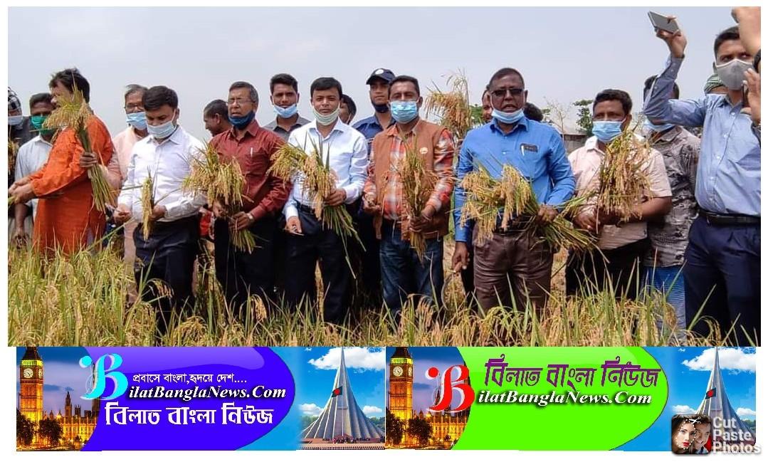 সুনামগঞ্জেবোরো ধান কাটা উৎসবেরআনুষ্ঠানিক উদ্বোধন